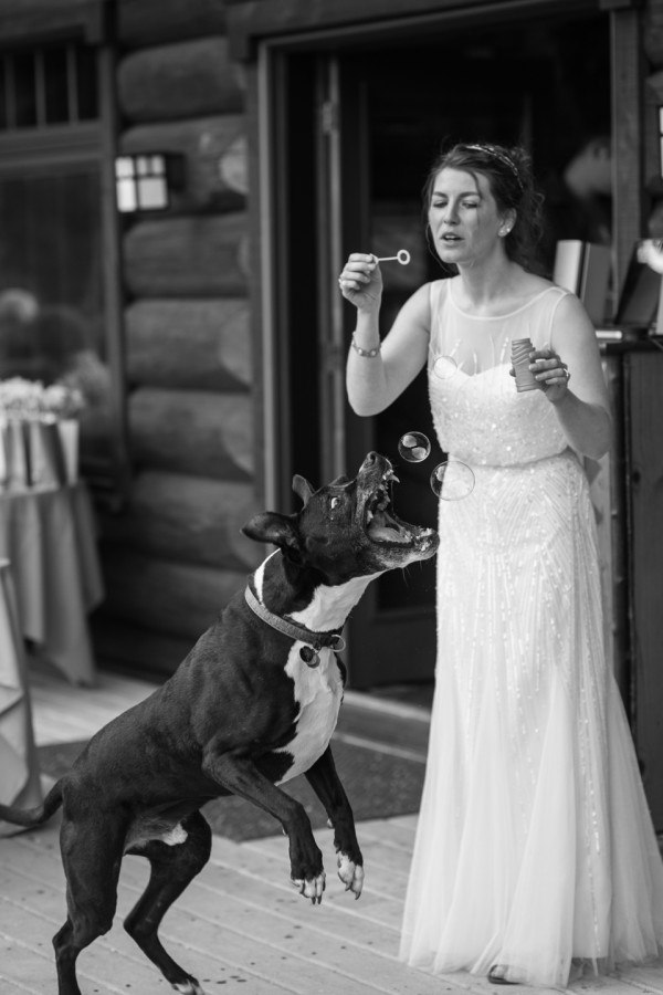 funny dog wedding photo